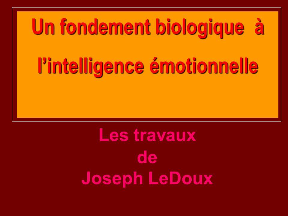 Un fondement biologique à lintelligence émotionnelle Les travaux de Joseph LeDoux
