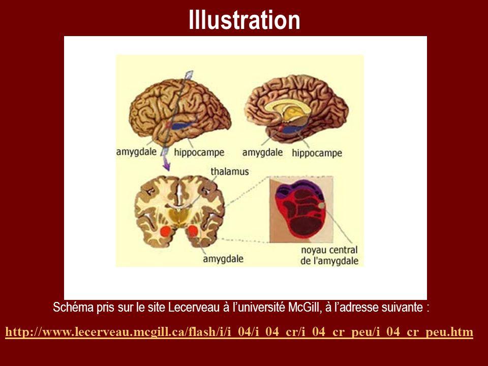 Schéma pris sur le site Lecerveau à luniversité McGill, à ladresse suivante : http://www.lecerveau.mcgill.ca/flash/i/i_04/i_04_cr/i_04_cr_peu/i_04_cr_