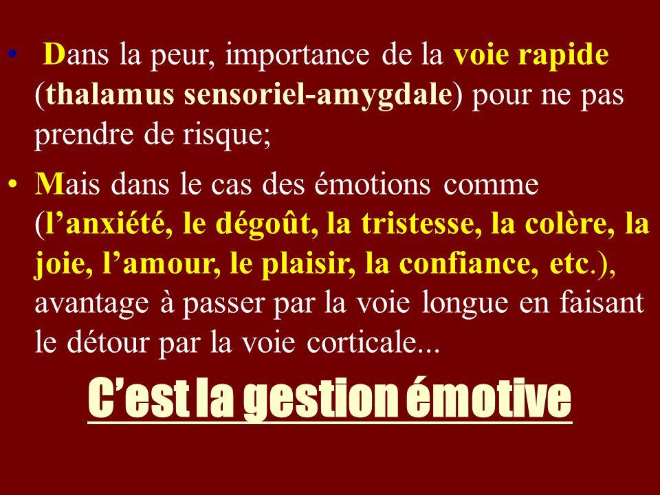Dans la peur, importance de la voie rapide (thalamus sensoriel-amygdale) pour ne pas prendre de risque; Mais dans le cas des émotions comme (lanxiété,