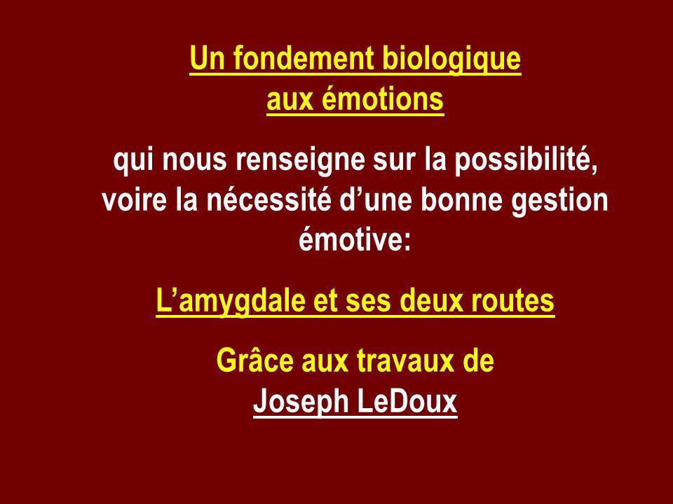 Un fondement biologique aux émotions qui nous renseigne sur la possibilité, voire la nécessité dune bonne gestion émotive: Lamygdale et ses deux route
