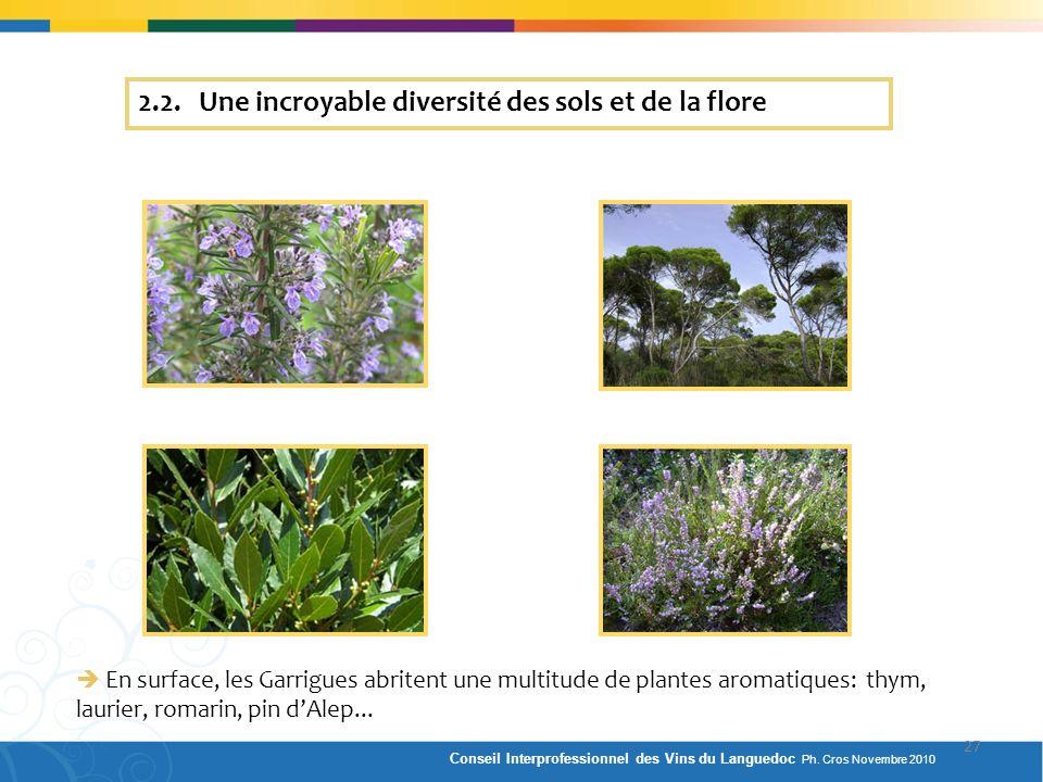 2.2. Une incroyable diversité des sols et de la flore En surface, les Garrigues abritent une multitude de plantes aromatiques: thym, laurier, romarin,