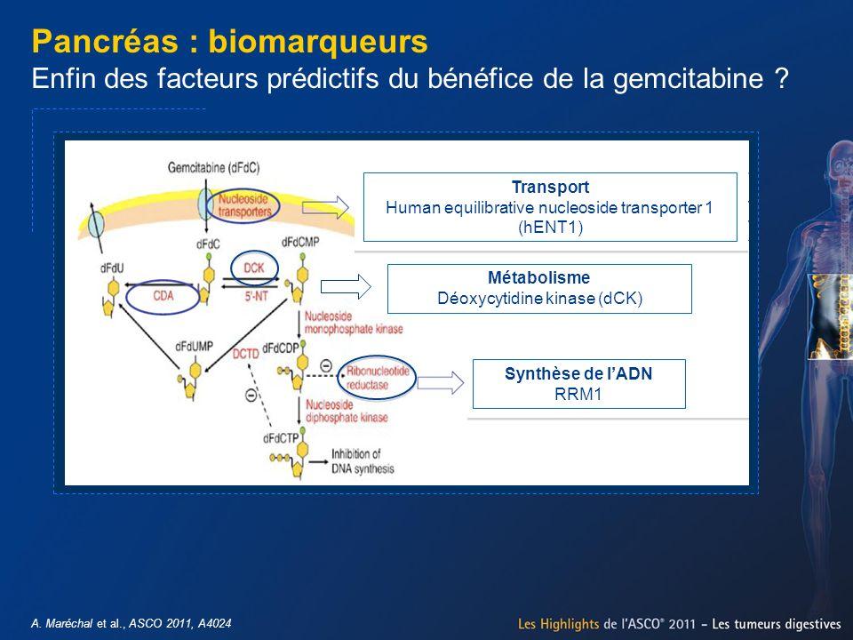 A. Maréchal et al., ASCO 2011, A4024 Pancréas : biomarqueurs Enfin des facteurs prédictifs du bénéfice de la gemcitabine ? Transport Human equilibrati