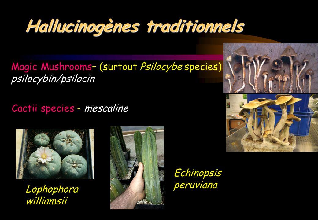 Les hallucinogènes
