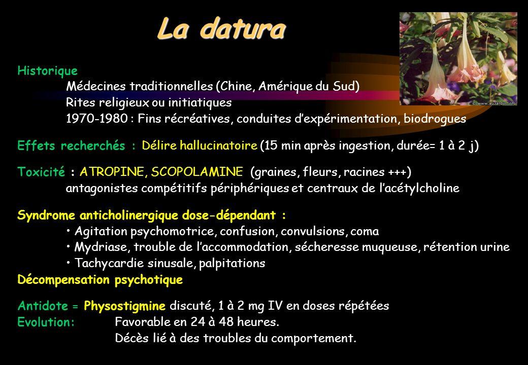 LSD ou acide - Diéthylamide de lacide lysergique, obtenu à partir de lergot de seigle - Mouvement psychédélique (USA, 60s), déclin (80s) puis nouvel essor - Formes: cp, buvard, micropointe (mine de crayon), bloc de gélatine, poudre - Sandwich: alterner buvard LSD et ecstasy /3h - Le plus puissant hallucinogène: fou rire incontrôlable, délire, synesthésies altération de la perception temps/distance, perturbations somesthésiques - Troubles végétatifs : mydriase, hypersudation / sécheresse, vomissements, palpitations, HTA, tremblements, incoordination motrice - Trip (de 5 à 12 h) suivi dune redescente désagréable (confusion, angoisse, panique, paranoïa, phobies, délire) avec flash-back