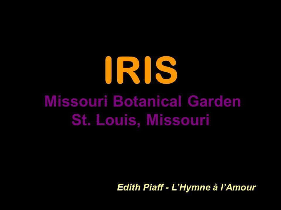 IRIS Missouri Botanical Garden St. Louis, Missouri Edith Piaff - LHymne à lAmour