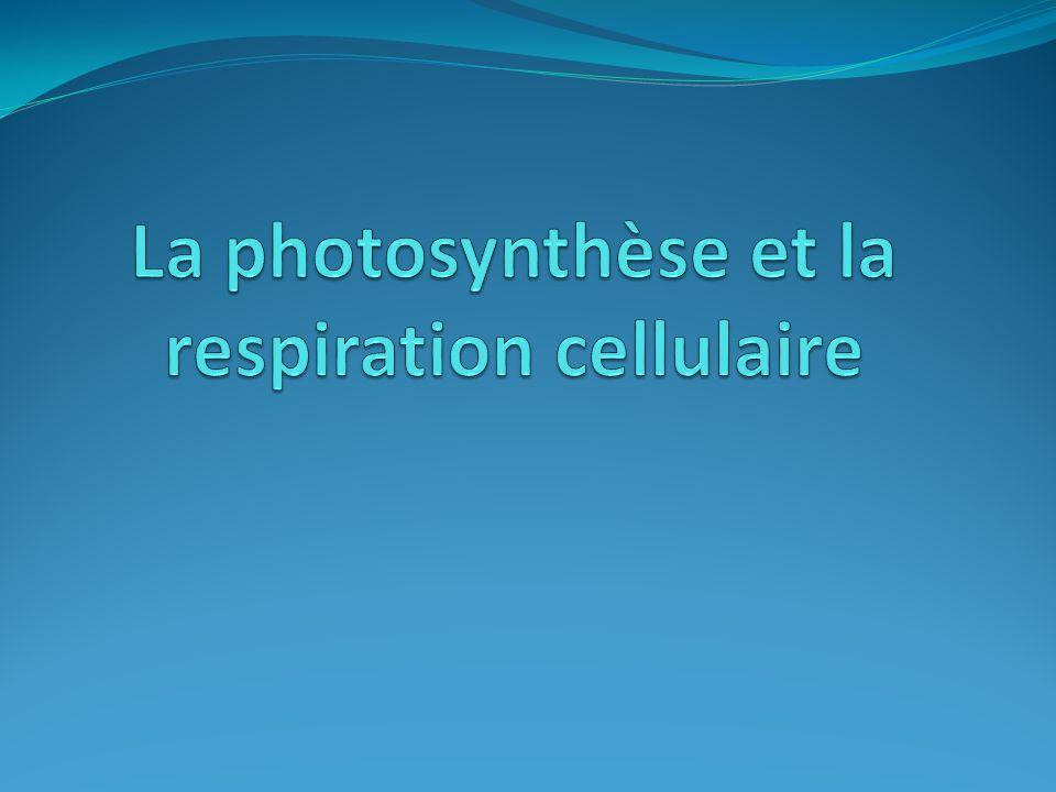 1.La photosynthèse Comment les plantes se nourrissent-elles .