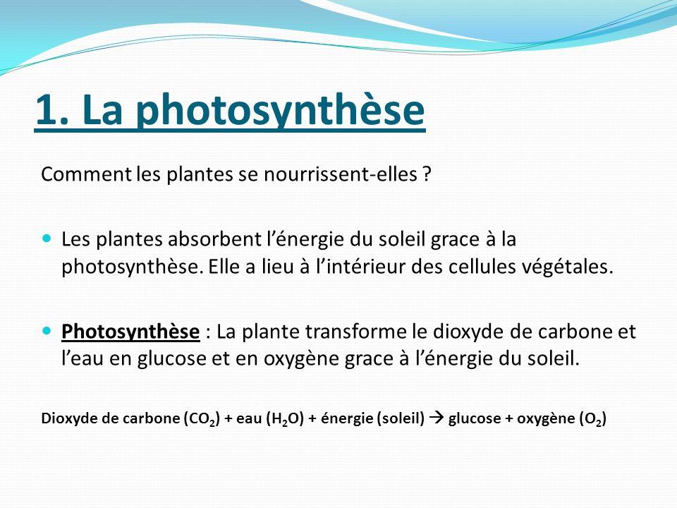1. La photosynthèse Comment les plantes se nourrissent-elles ? Les plantes absorbent lénergie du soleil grace à la photosynthèse. Elle a lieu à lintér