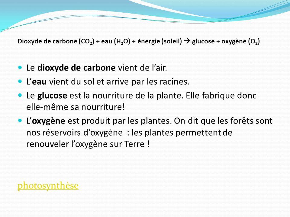 Le dioxyde de carbone vient de lair. Leau vient du sol et arrive par les racines. Le glucose est la nourriture de la plante. Elle fabrique donc elle-m