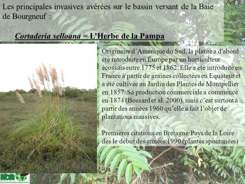 Originaire dAmérique du Sud, la plante a d'abord été introduite en Europe par un horticulteur écossais entre 1775 et 1862. Elle a été introduite en Fr