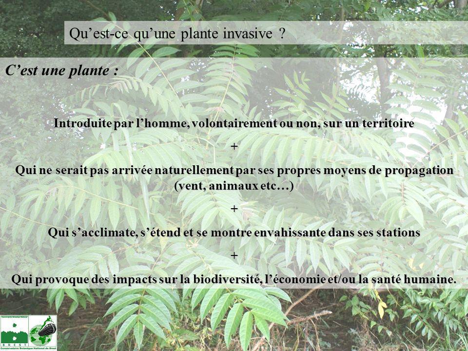 Quest-ce quune plante invasive ? Cest une plante : Introduite par lhomme, volontairement ou non, sur un territoire + Qui ne serait pas arrivée naturel