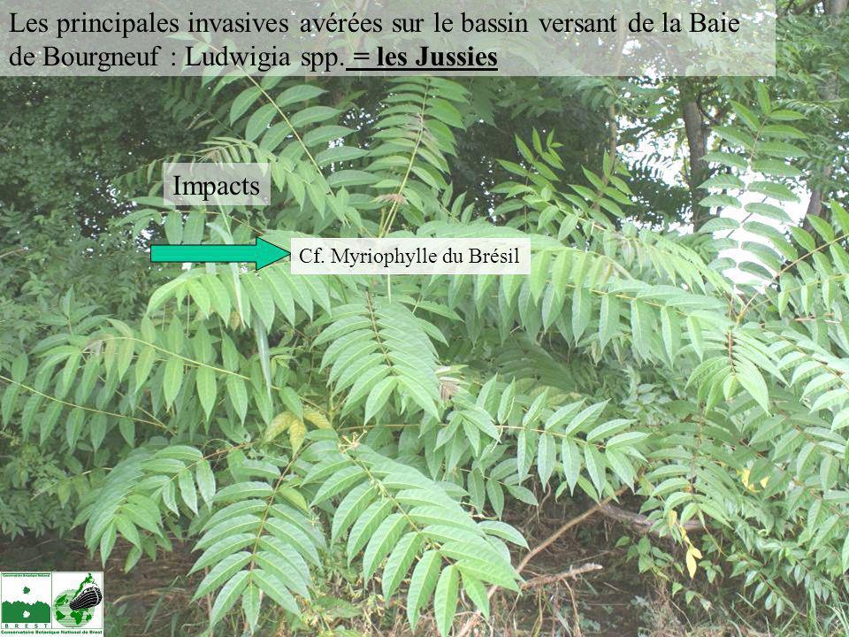 Impacts Cf. Myriophylle du Brésil Les principales invasives avérées sur le bassin versant de la Baie de Bourgneuf : Ludwigia spp. = les Jussies