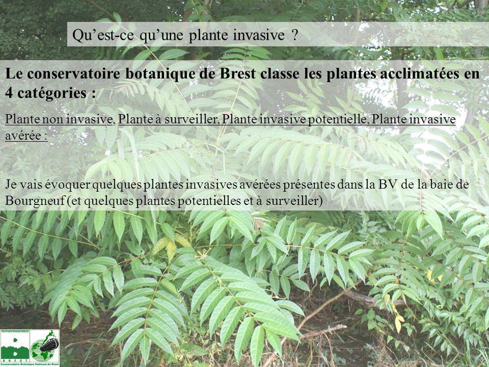 Les principales invasives avérées sur le bassin versant de la Baie de Bourgneuf : Ailanthus altissima = le faux-vernis du japon, lAilanthe Originaire du Sud de la Chine, elle est introduite en France dès le 18è Siècle (introduit pour la sériciculture).