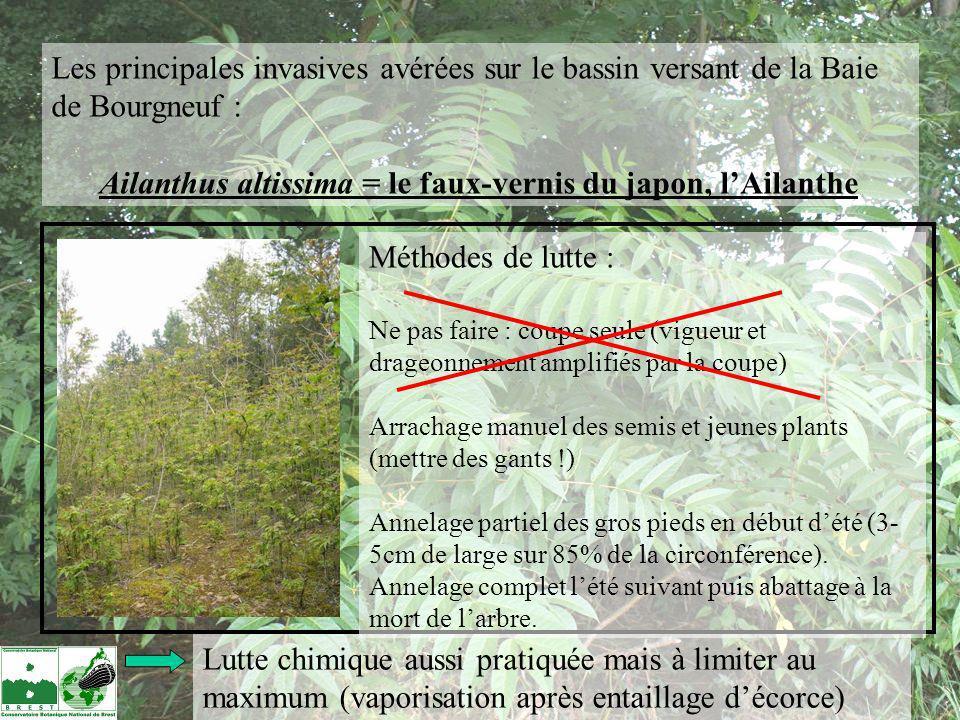 Les principales invasives avérées sur le bassin versant de la Baie de Bourgneuf : Ailanthus altissima = le faux-vernis du japon, lAilanthe Méthodes de