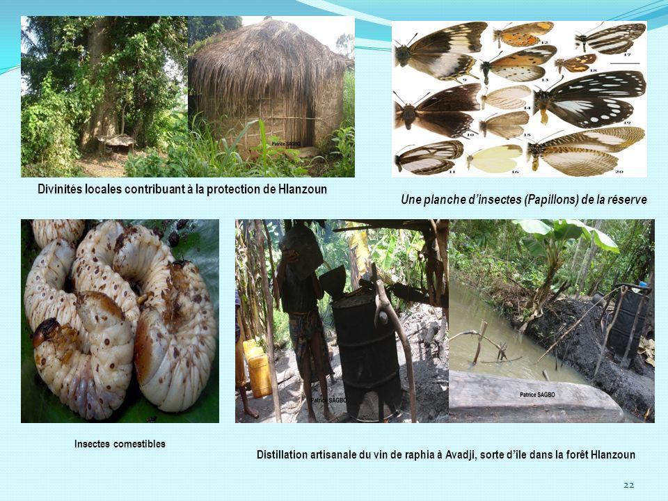 22 Divinités locales contribuant à la protection de Hlanzoun Une planche dinsectes (Papillons) de la réserve Insectes comestibles Distillation artisan