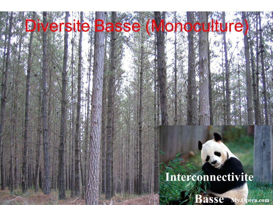 www.egs.mmu.ac.uk Diversite Basse (Monoculture) Interconnectivite Basse My.Opera.com