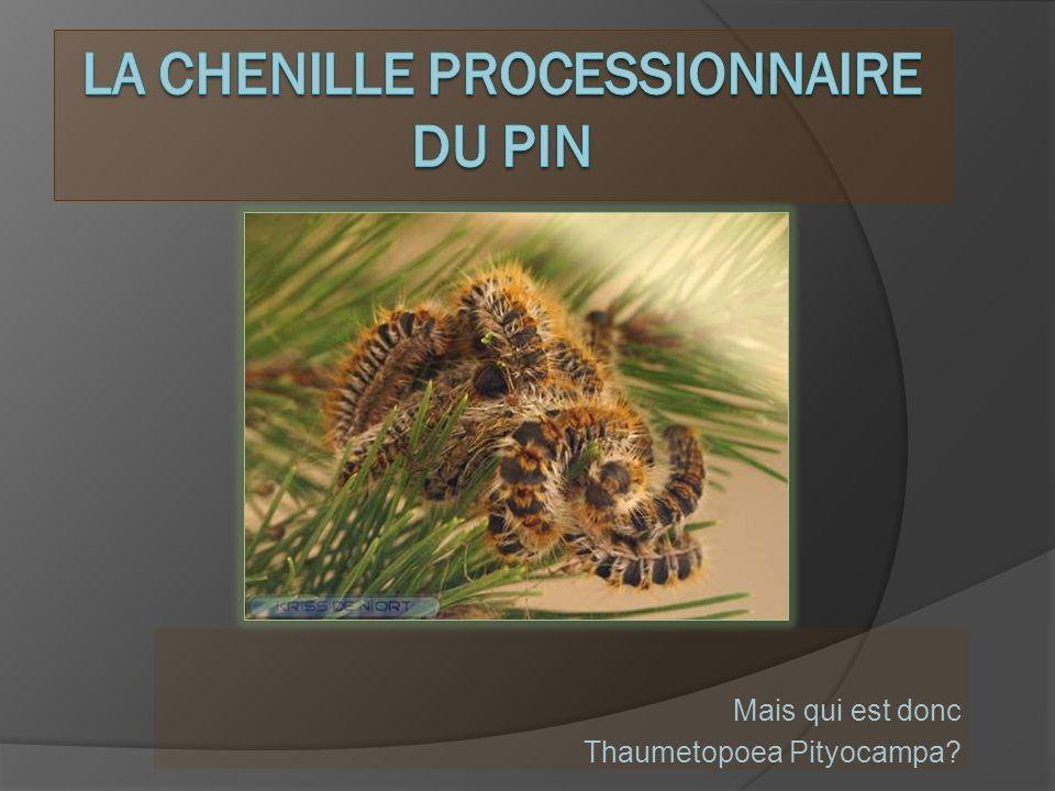 L es poils urticants sont extrêmement petits, de lordre de quelques microns.