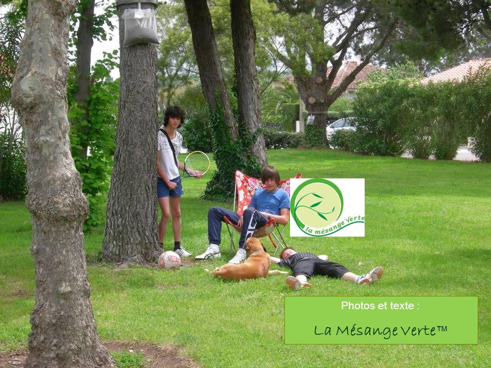 Photos et texte : La Mésange Verte