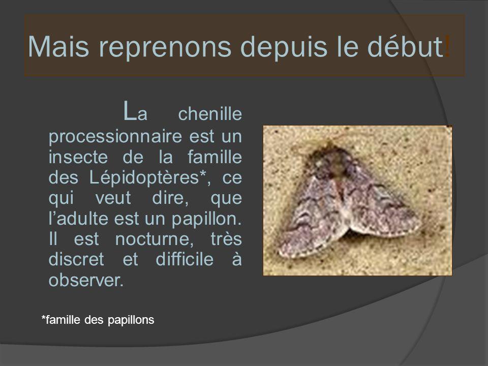 L e mâle est plus petit que la femelle et possède une houppe au bout de son abdomen.