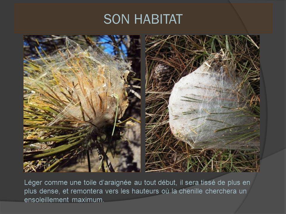 L e nid dhiver est un véritable radiateur solaire captant les proches infra rouges du soleil.