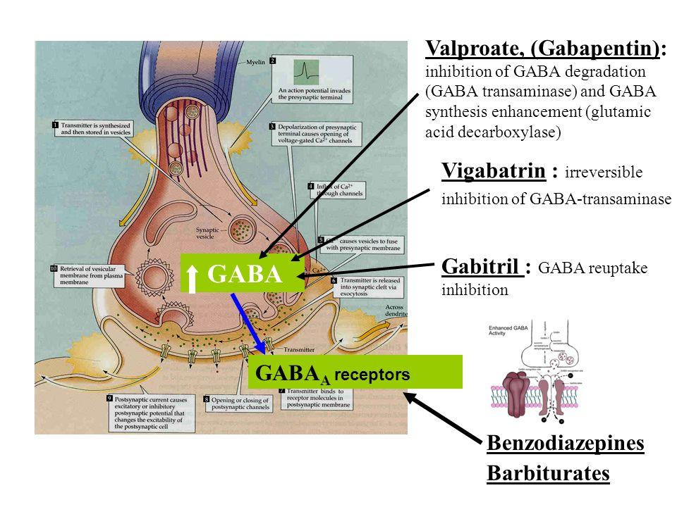 Vigabatrin : irreversible inhibition of GABA-transaminase GABA GABA A receptors Gabitril : GABA reuptake inhibition Valproate, (Gabapentin): inhibitio