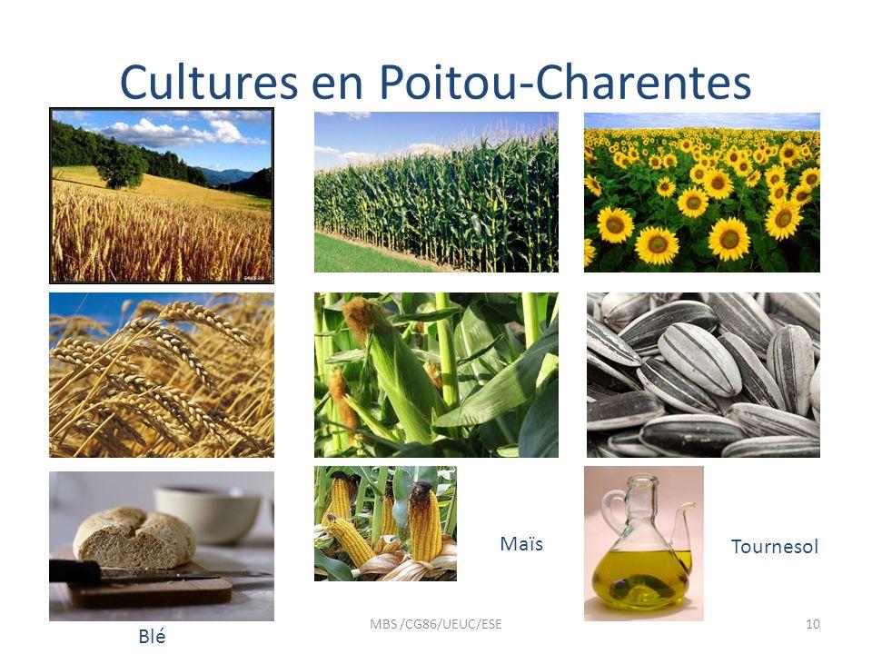 Cultures en Poitou-Charentes MBS /CG86/UEUC/ESE10 Blé Maïs Tournesol