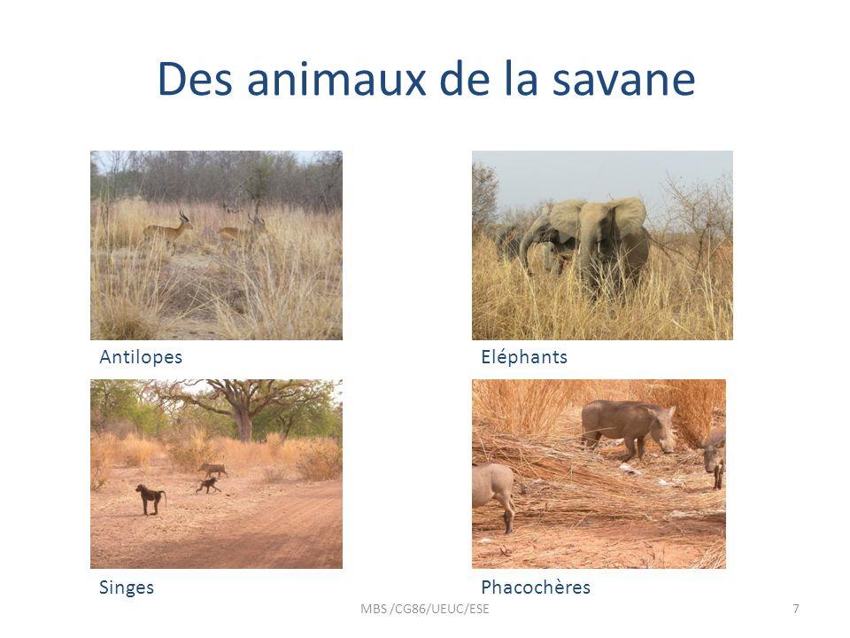 Des animaux de la savane MBS /CG86/UEUC/ESE7 AntilopesEléphants SingesPhacochères