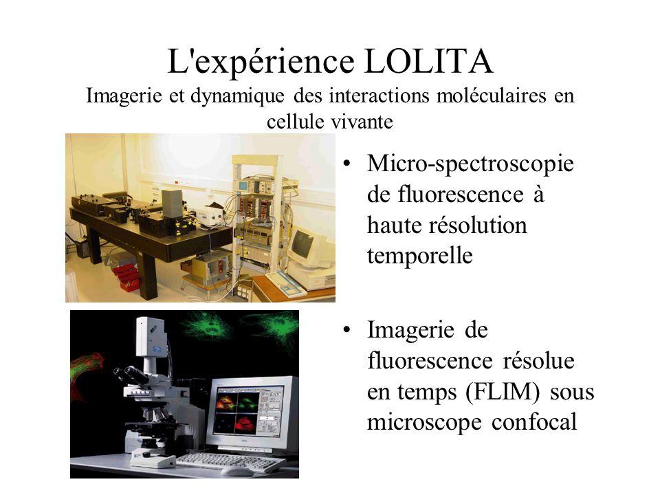 L'expérience LOLITA Imagerie et dynamique des interactions moléculaires en cellule vivante Micro-spectroscopie de fluorescence à haute résolution temp