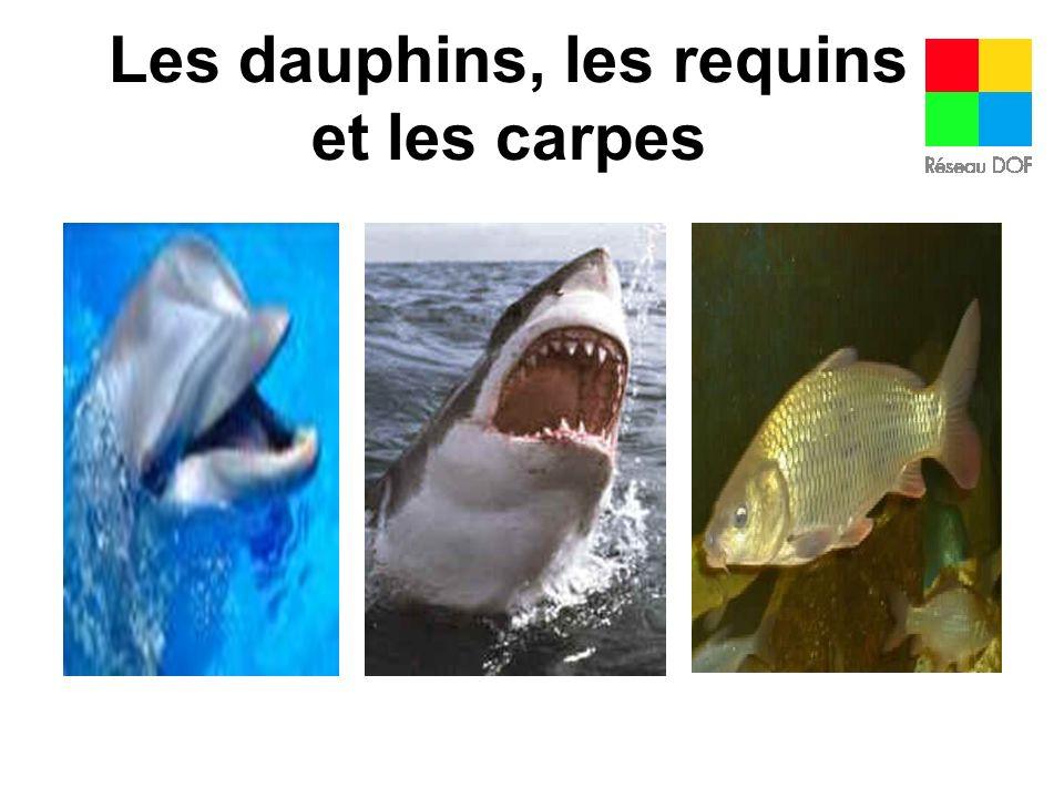 Les dauphins, les requins et les carpes