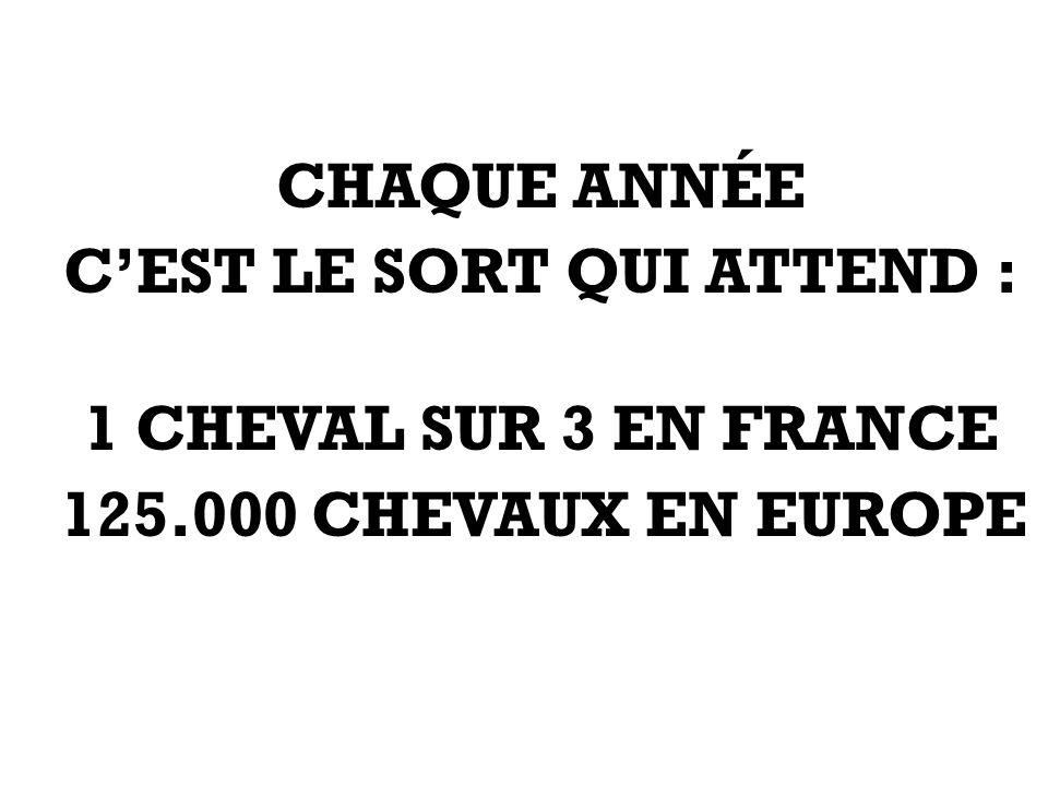CHAQUE ANNÉE CEST LE SORT QUI ATTEND : 1 CHEVAL SUR 3 EN FRANCE 125.000 CHEVAUX EN EUROPE