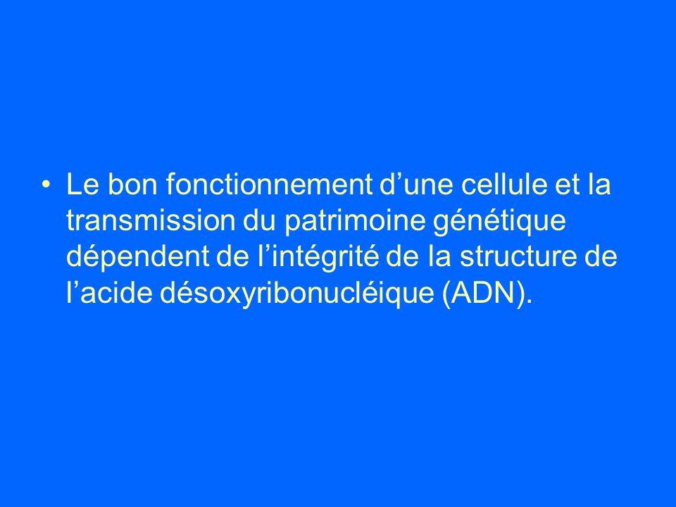 Le bon fonctionnement dune cellule et la transmission du patrimoine génétique dépendent de lintégrité de la structure de lacide désoxyribonucléique (A