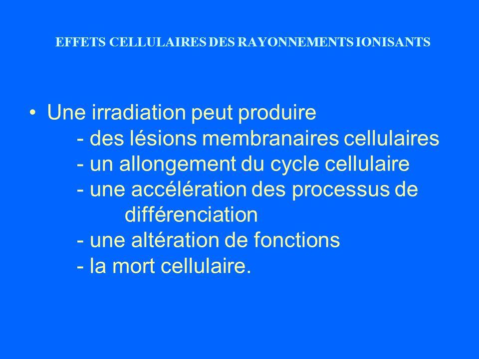 EFFETS CELLULAIRES DES RAYONNEMENTS IONISANTS Une irradiation peut produire - des lésions membranaires cellulaires - un allongement du cycle cellulair
