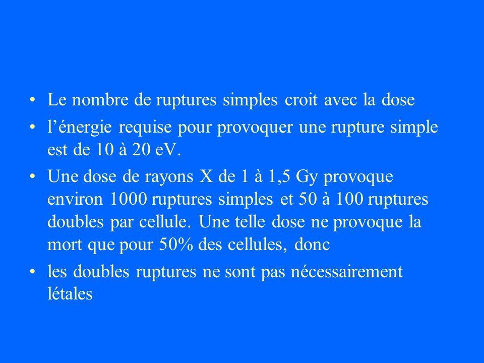 Le nombre de ruptures simples croit avec la dose lénergie requise pour provoquer une rupture simple est de 10 à 20 eV. Une dose de rayons X de 1 à 1,5