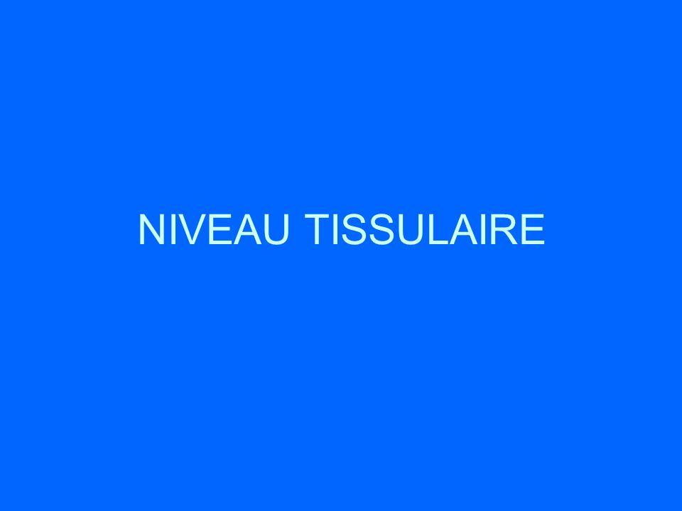 NIVEAU TISSULAIRE