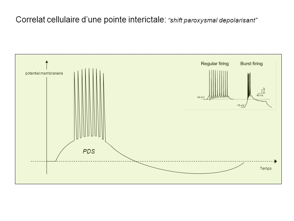 pointe interictale Correlat cellulaire dune pointe interictale: shift paroxysmal depolarisant potentiel membranaire Temps PDS