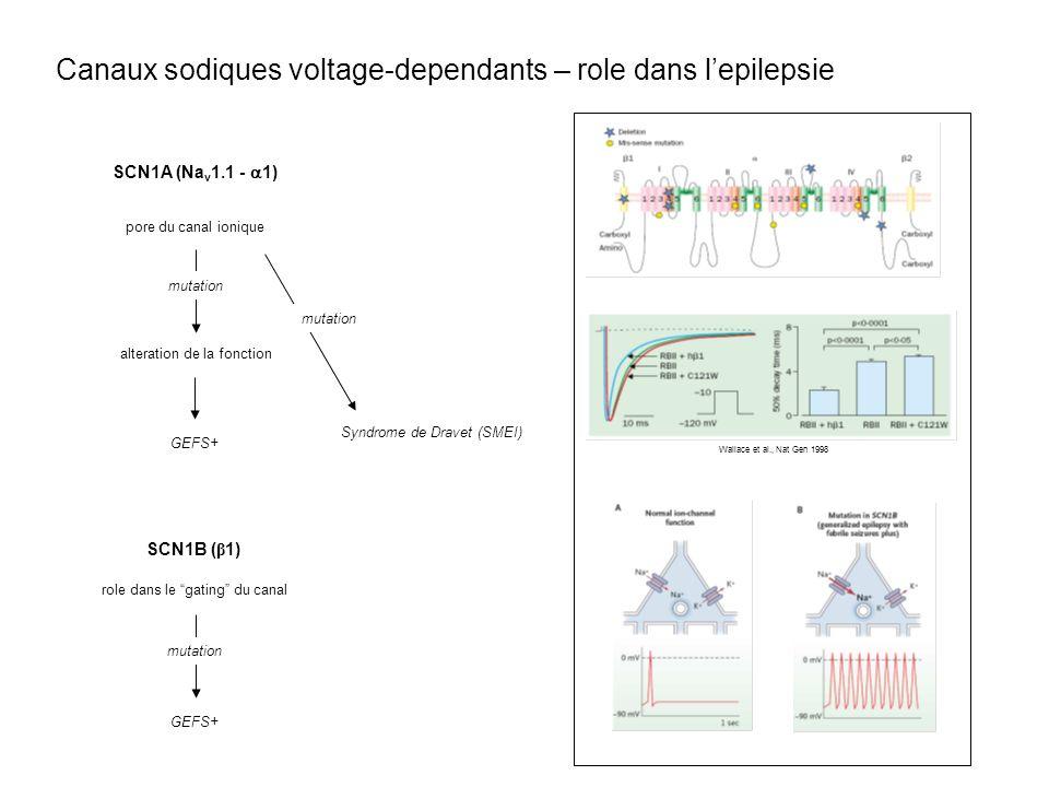 Wallace et al., Nat Gen 1998 SCN1A (Na v 1.1 - 1) pore du canal ionique GEFS+ mutation alteration de la fonction Syndrome de Dravet (SMEI) mutation SC