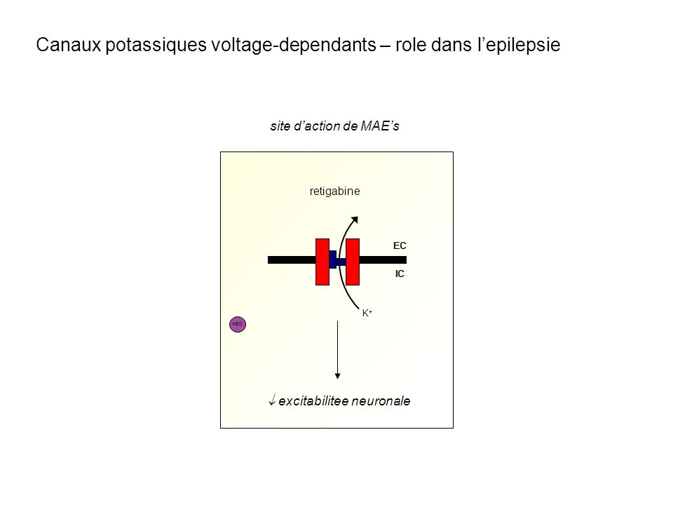 retigabine site daction de MAEs AED EC IC EC IC K+K+ excitabilitee neuronale Canaux potassiques voltage-dependants – role dans lepilepsie