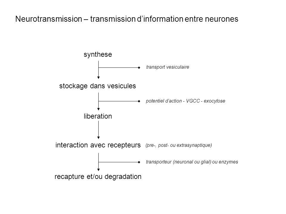 Neurotransmission – transmission dinformation entre neurones synthese stockage dans vesicules liberation interaction avec recepteurs recapture et/ou d
