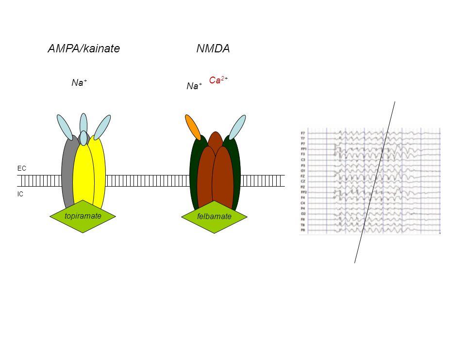 AMPA/kainateNMDA EC IC felbamatetopiramate Na + Ca 2+ Na +