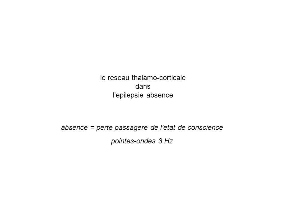 le reseau thalamo-corticale dans lepilepsie absence absence = perte passagere de letat de conscience pointes-ondes 3 Hz