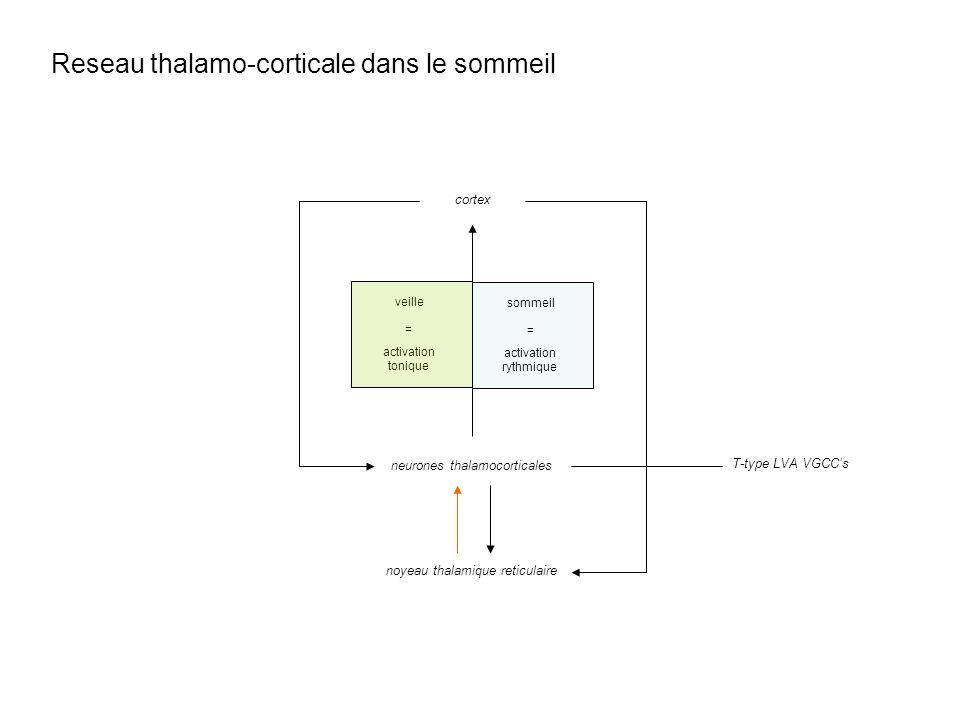 Reseau thalamo-corticale dans le sommeil noyeau thalamique reticulaire neurones thalamocorticales cortex activation tonique veille = activation rythmi