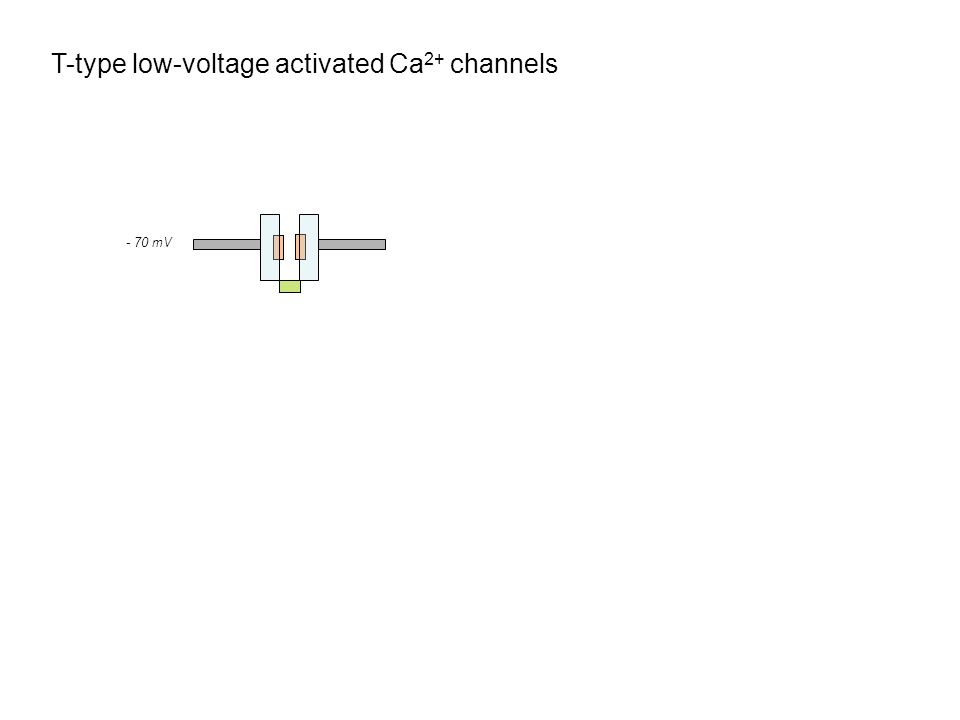 T-type low-voltage activated Ca 2+ channels - 70 mV - 90 mV GABA / IPSP - 50 mV Ca 2+ - 70 mV