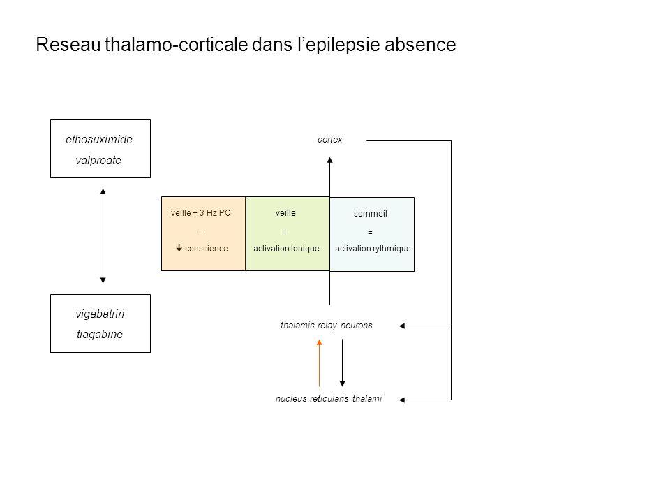 nucleus reticularis thalami thalamic relay neurons cortex activation tonique veille = activation rythmique sommeil = conscience veille + 3 Hz PO = eth
