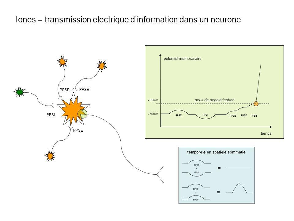 Iones – transmission electrique dinformation dans un neurone PPSI PPSE PPSI seuil de depolarisation -55mV -70mV temps PPSE potentiel membranaire PPSE