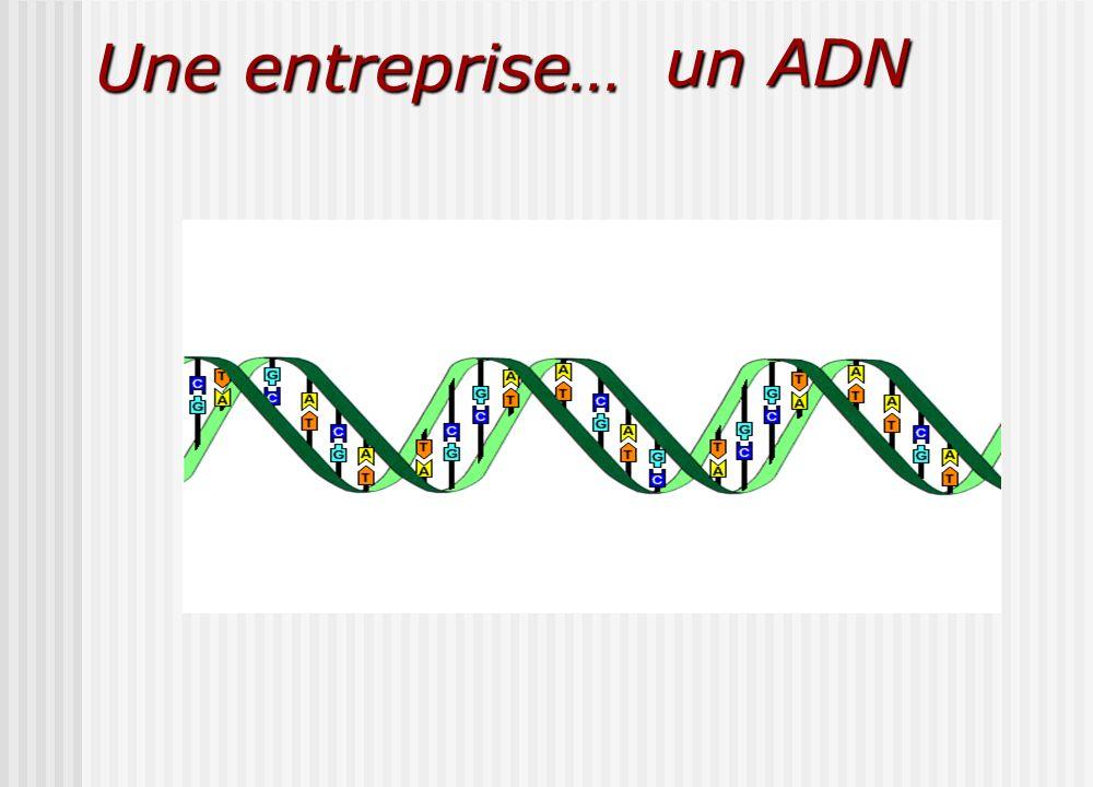 Une entreprise… un ADN