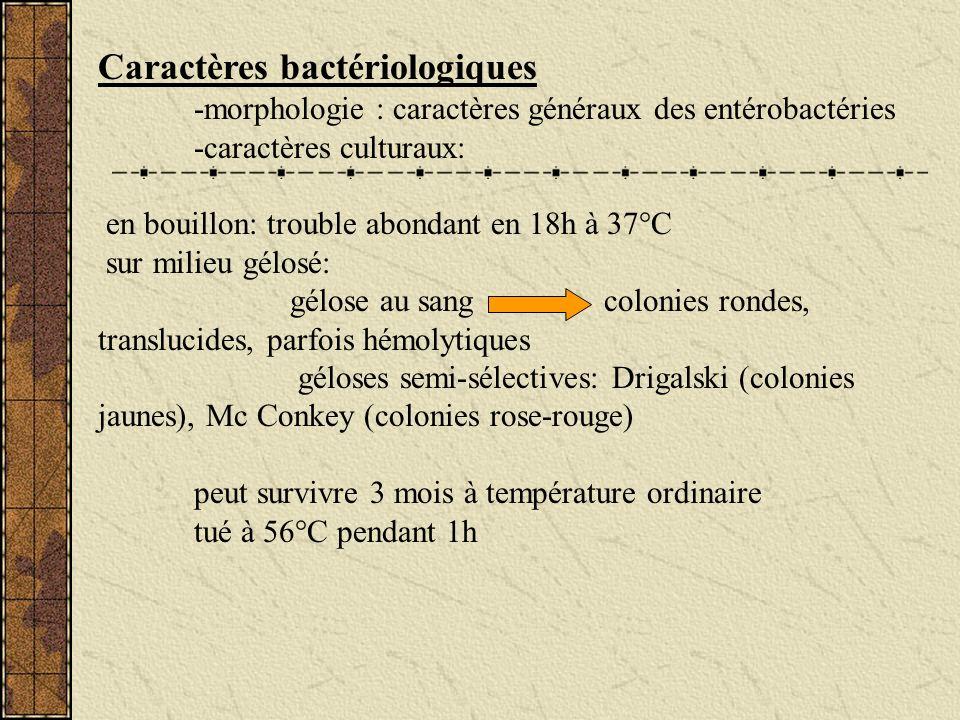 Caractères bactériologiques -morphologie : caractères généraux des entérobactéries -caractères culturaux: en bouillon: trouble abondant en 18h à 37°C