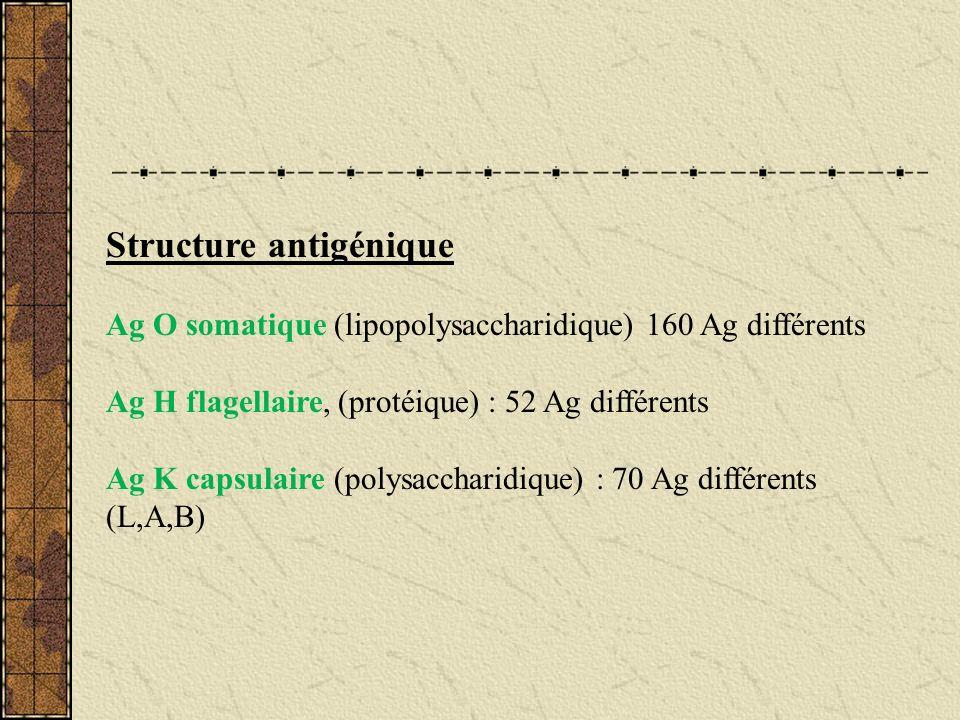 Structure antigénique Ag O somatique (lipopolysaccharidique) 160 Ag différents Ag H flagellaire, (protéique) : 52 Ag différents Ag K capsulaire (polys