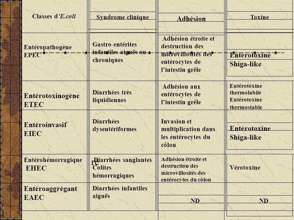 Classes dE.coli Syndrome clinique Adhésion Toxine Entéropathogène EPEC Gastro-entérites infantiles aiguës ou chroniques Adhésion étroite et destructio