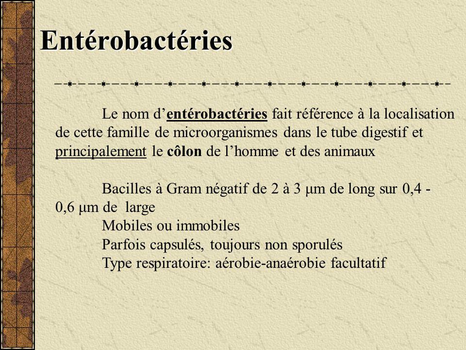 Entérobactéries Le nom dentérobactéries fait référence à la localisation de cette famille de microorganismes dans le tube digestif et principalement l