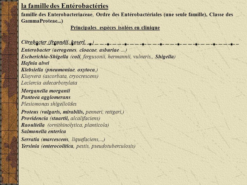 la famille des Entérobactéries famille des Enterobacteriaceae, Ordre des Entérobactériales (une seule famille), Classe des GammaProteae...) Principale