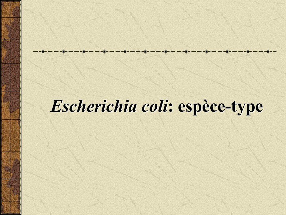 Escherichia coli: espèce-type